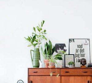 aparador plantas