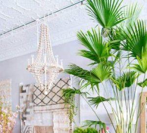 decorar con palmeras
