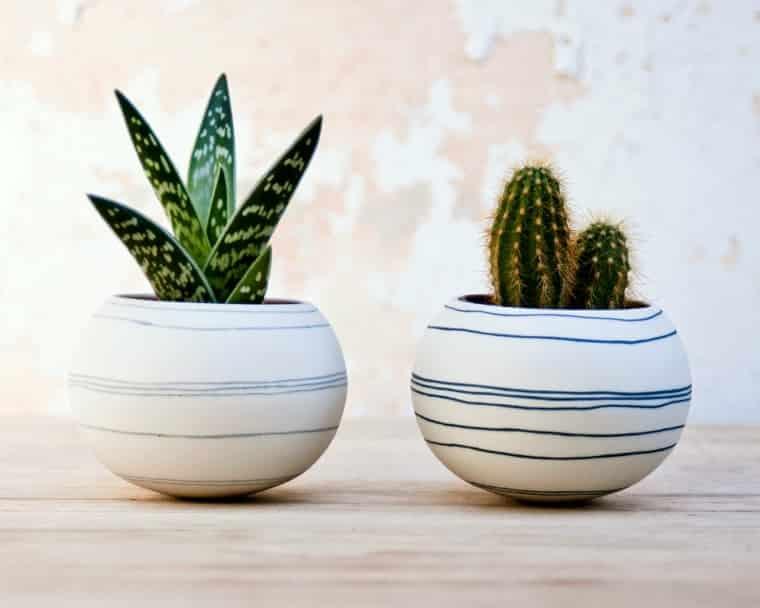Dónde colocar los cactus según el Feng Shui ideas-para-decorar Blog Decoracion
