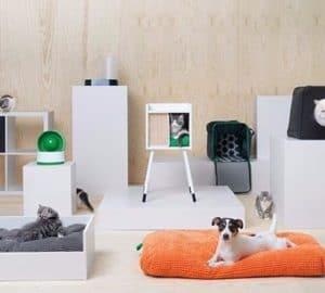 Consejos prácticos de cómo decorar teniendo mascotas en casa curiosidades-decoracion, complementos-decoracion-2 Blog Decoracion