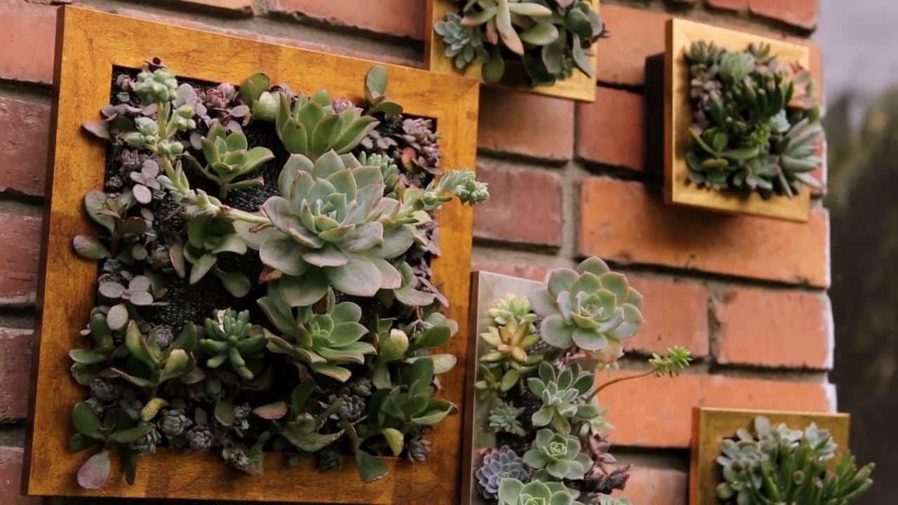 Cuadros hechos con plantas, creatividad y naturaleza para decorar tu hogar
